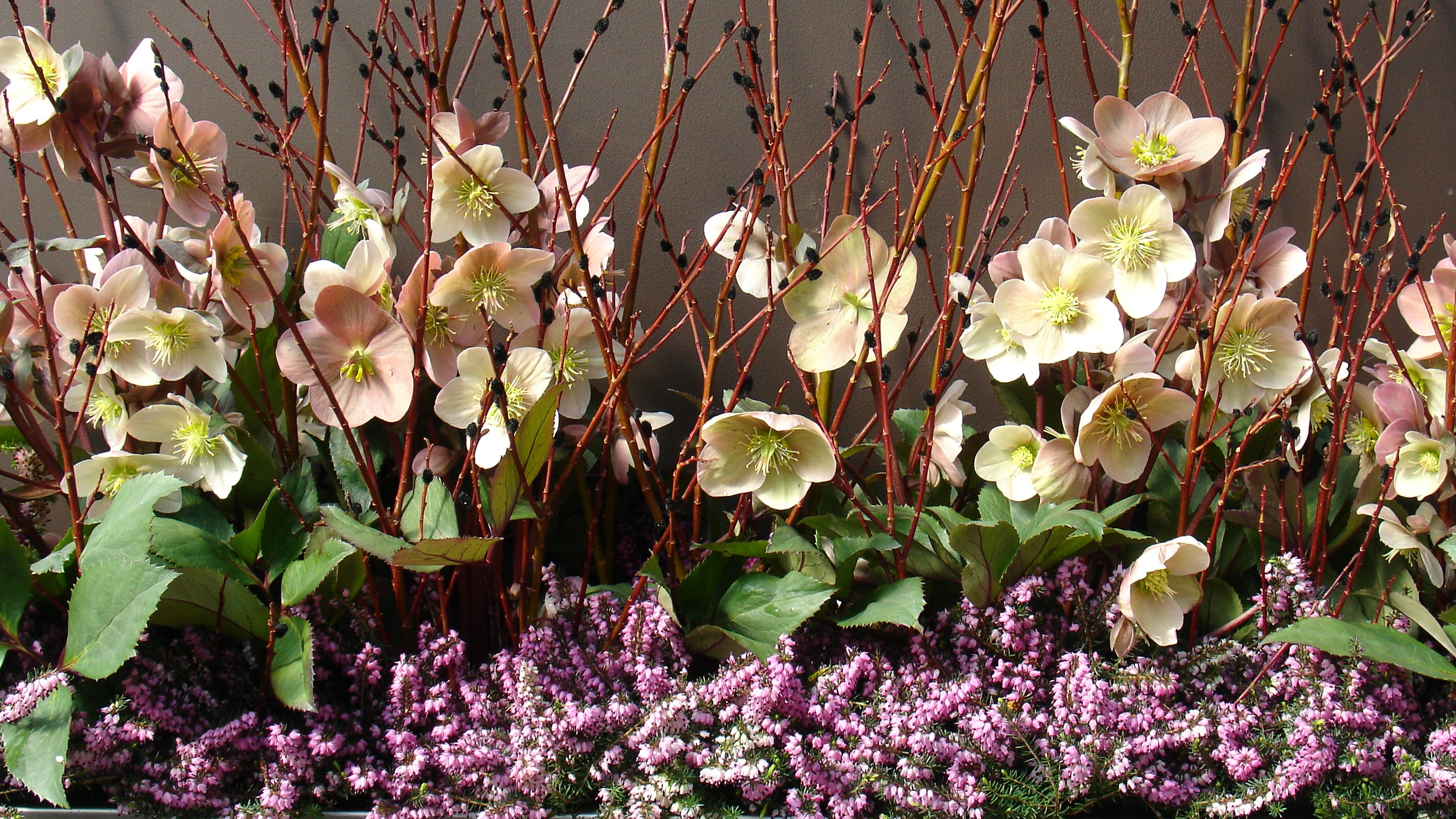 Custom Container Plantings - Plant World on garden steps, garden plants, garden shrubs, garden vegetable garden, garden pots, garden yard spinners, garden walls, garden trellis, garden bench, garden accessories, garden pools, garden urns, garden beds, garden art, garden patios, garden tools, garden seeders, garden arbors, garden ideas, garden boxes,