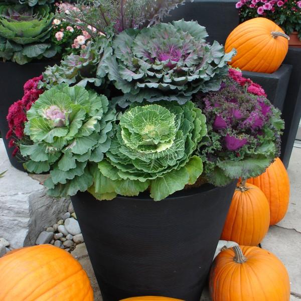 Fall Urn - Plant World