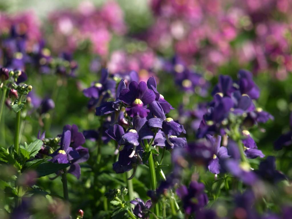 Home Plant World – Plant World Nursery and Garden Center