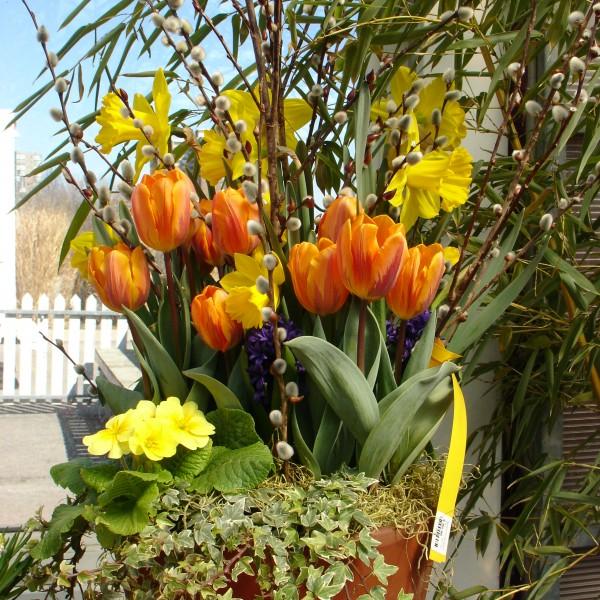 Spring Urn - Plant World