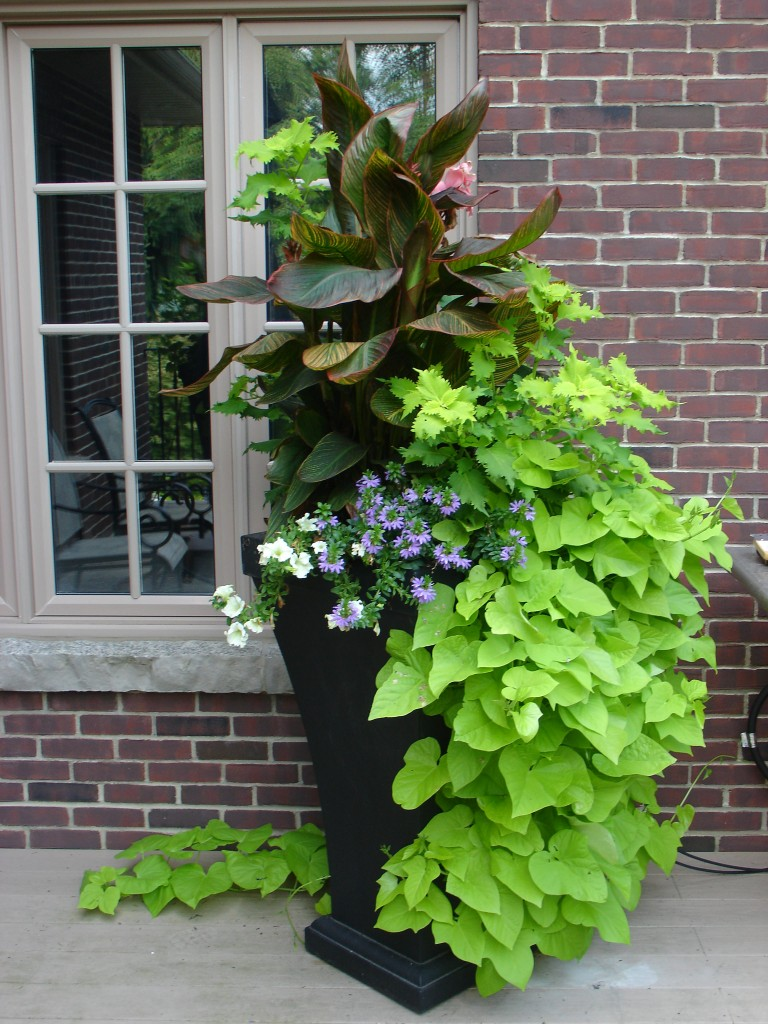 Custom Container Plantings Plant World