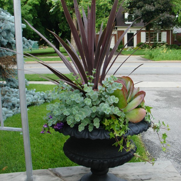 Summer Urn - Plant World